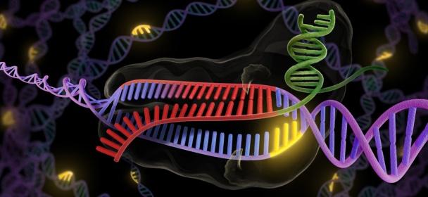 CRISPR6